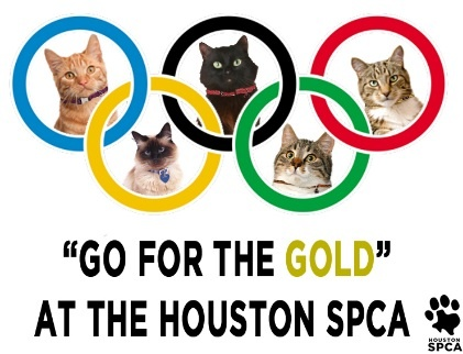 Discount Cat Adoptions at Houston SPCA, CAP (With images