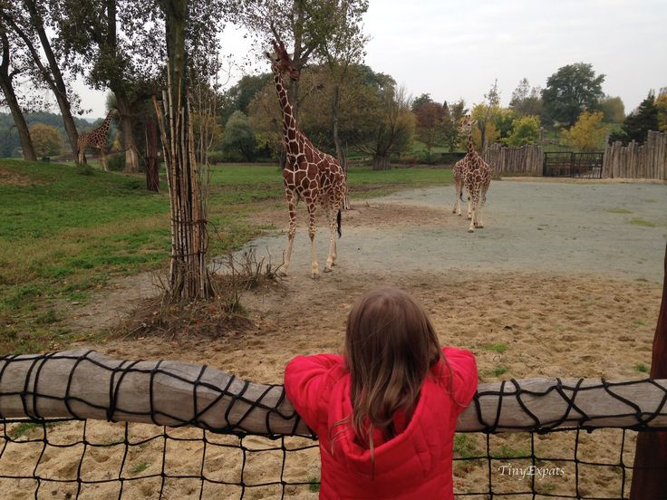 African Safari in Dvur Kralove nad Labem