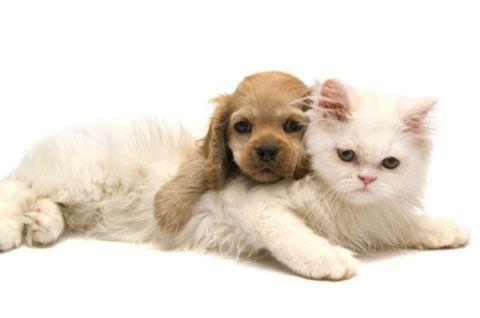 Calling the Shots: Petplan pet insurance looks at vaccine side effects: Cat, Adorable Pet, Bing Pet, Pet Girls, Cute Pet, Boys Pet, Pet Boys, Pet Pet, Girls Pet