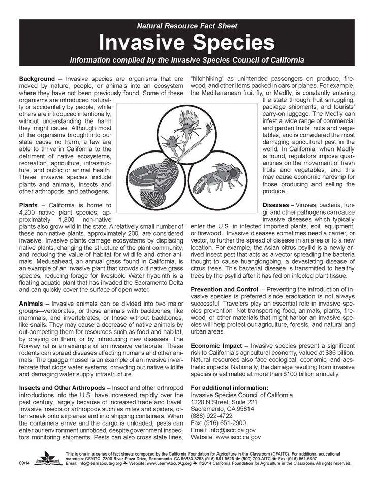 invasive species worksheet kidz activities. Black Bedroom Furniture Sets. Home Design Ideas