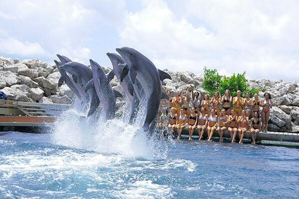 Nuestros bellos delfines deleitaron a las porristas con un espectacular show