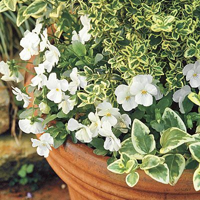 We Love These Blooms - Secrets for Great Fall Pots - Southern Living
