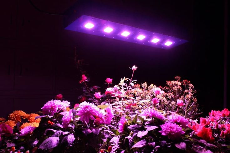diy uv light for plants