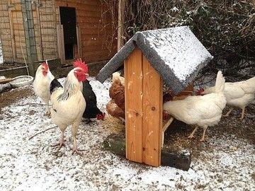 www.sei-mit-den-Tieren.de - Unsere Hühner