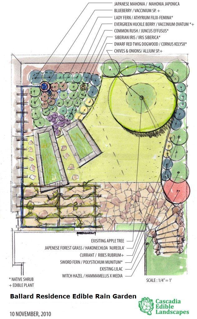 ideas about Rain Garden on Pinterest Gardening