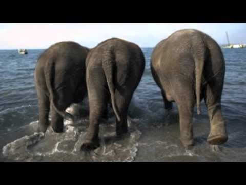 elephants have wrinkles- youtube