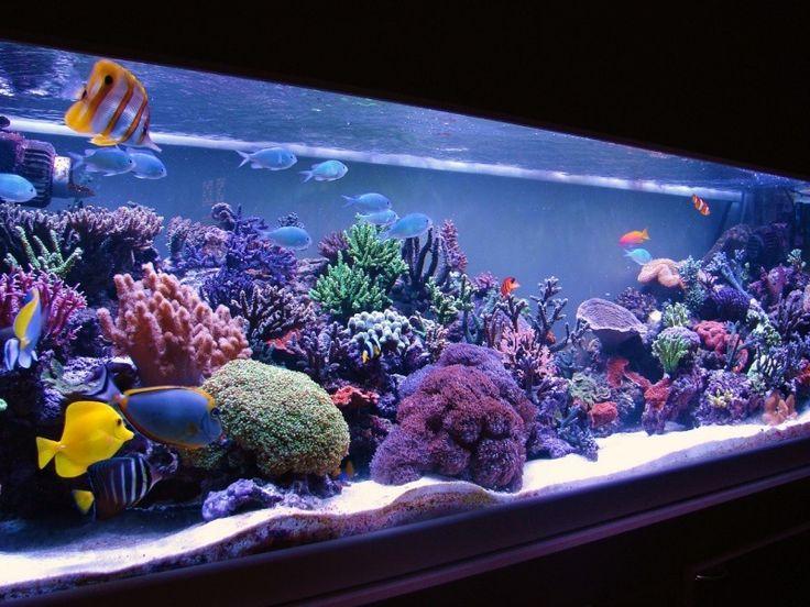 Aquarium de poissons tropicaux!!!!