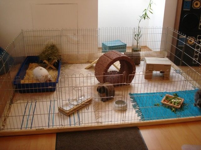 Cool living room housing, for when i get my own place with Fluffy :D