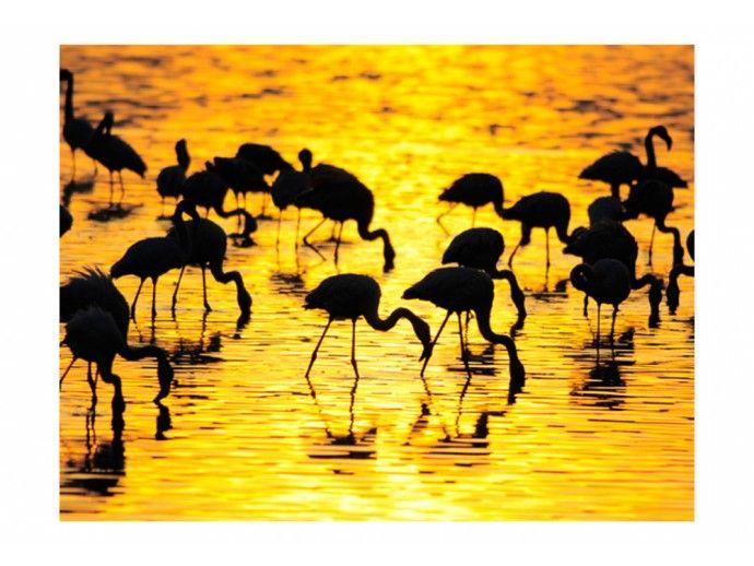 Carta da parati 350x270 cm Kenya: fenicotteri del lago Nakuru 61318