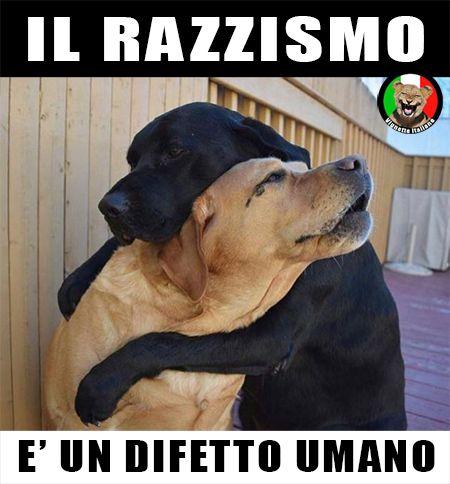 Il razzismo è un difetto umano. Tra cani non c'è il razzismo che esiste tra gli uomini. Vignetta Vignette in italiano e italiane