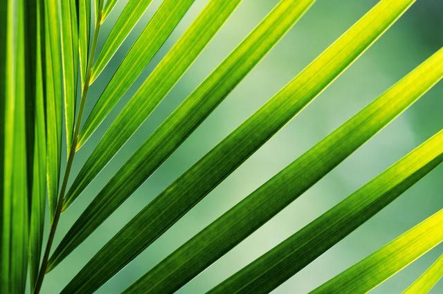 17 best images about low light plants on pinterest snake plant catalog and planters - Hardy office plants ...