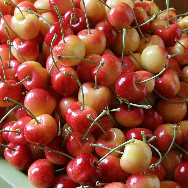 The Fruit Company Rainier Cherry Giveaway. Is giving away 3 lbs of Rainier Cherries to TWO lucky recipients!  If you've never experienced a splendidly juicy Rainier from the Northwest, there's no time like the present. We deliver them to your doorstep fresh from our own orchards. Their sweet, creamy texture make them the champagne of cherries.  Value $59.95  Giveaway ends on June 8, 2015 at 11:59 AM PST