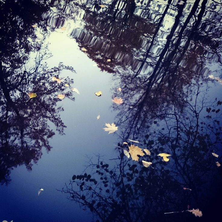 Autumn in St.P.