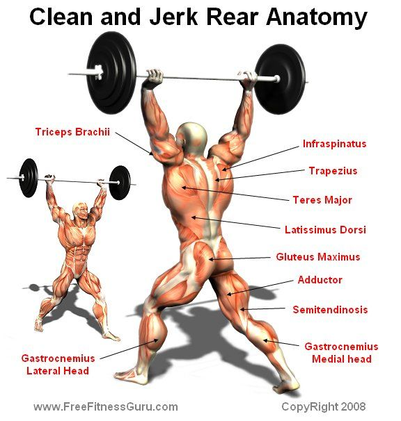 17 Best Images About Fitness Effected Parts On Pinterest