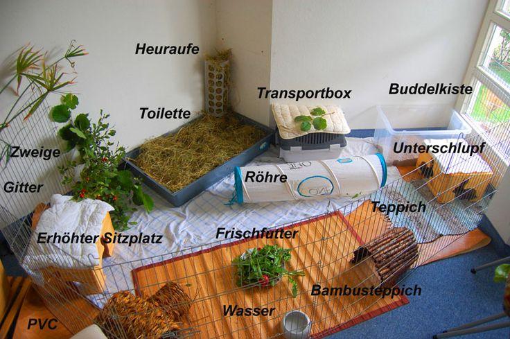 Einrichtung & Spielzeug - Kaninchenwiese - Kaninchenratgeber zur Haltung & Ernährung