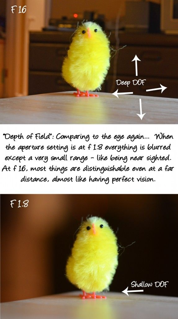 Simple Camera Tips Series: Aperture explained! - Bubbly Nature Creations