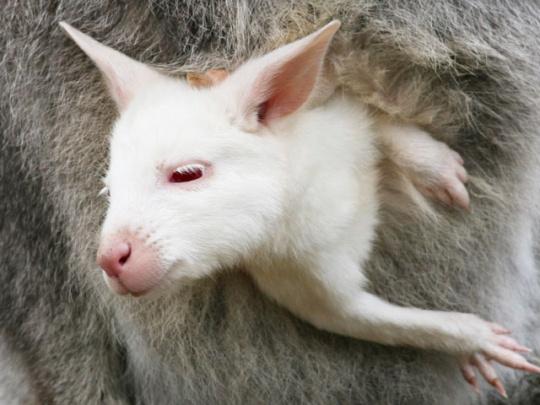 25 Rare Albino Animals