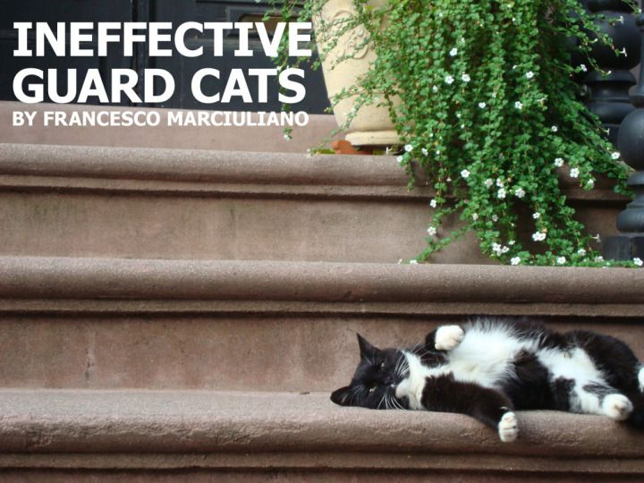 Unpublished Coffee Table Books: Ineffective Guard Cats