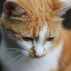 Le stress chez le chat, ses origines et ses graves conséquences sur sa santé