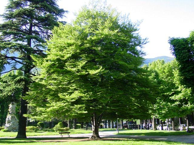 Albero della Vita – I Celti associare ad ogni periodo dell'anno un albero differente. L'albero, simbolicamente, rappresenta la vita naturale