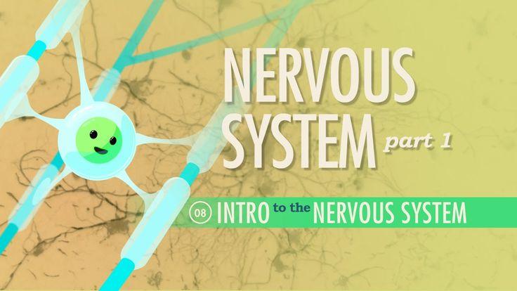 The Nervous System, Part 1: A&P #8