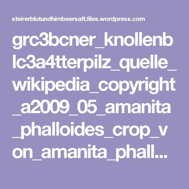 grc3bcner_knollenblc3a4tterpilz_quelle_wikipedia_copyright_a2009_05_amanita_phalloides_crop_von_amanita_phalloides_archenzoderivative_work.jpg (640×760)