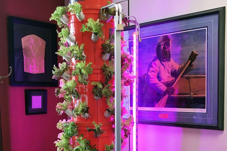 Lettuce flourishes in a hydroponic grow tower in Sen. Lisa Murkowski's office recently in Washington, D.C. (Erica Martinson / Alaska Dispatch News)
