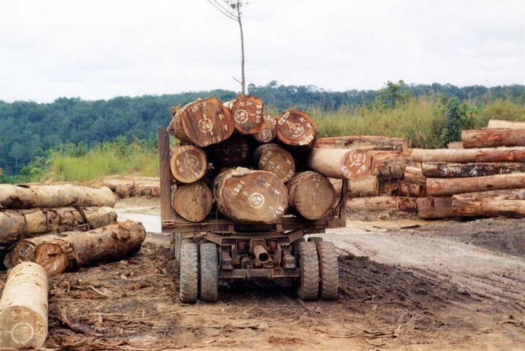 logging transport africa