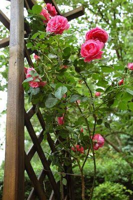 Lady And Mirror: Tündérkertem - A rózsakapu