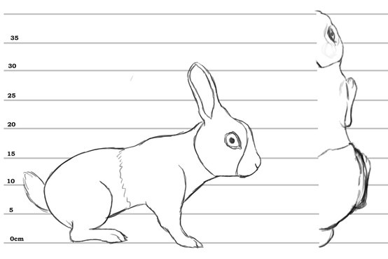 Animal Blueprint Model Sheet 3d Modeling Pinterest