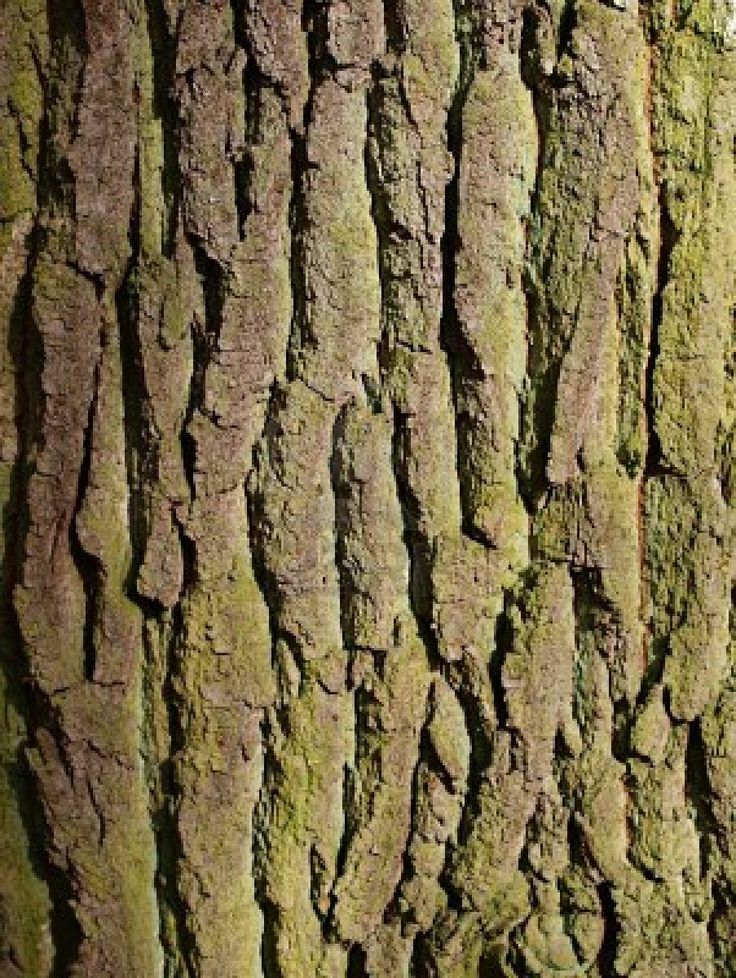 close-up-of-elm-tree-bark