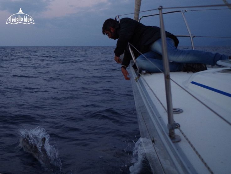 sailing Sicily with dolphins