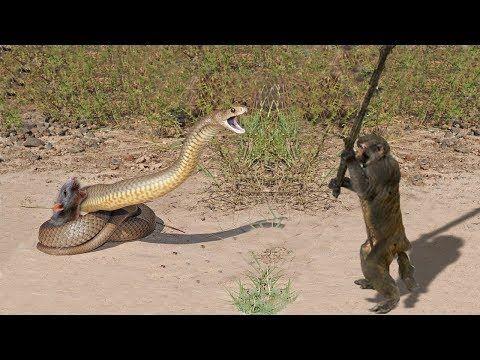 Amazing Elephant Save Baby Elephant From Crocodile Hunting   Animals Hunting Fail - YouTube