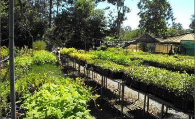 Kumbartcho Native Plant Nursery