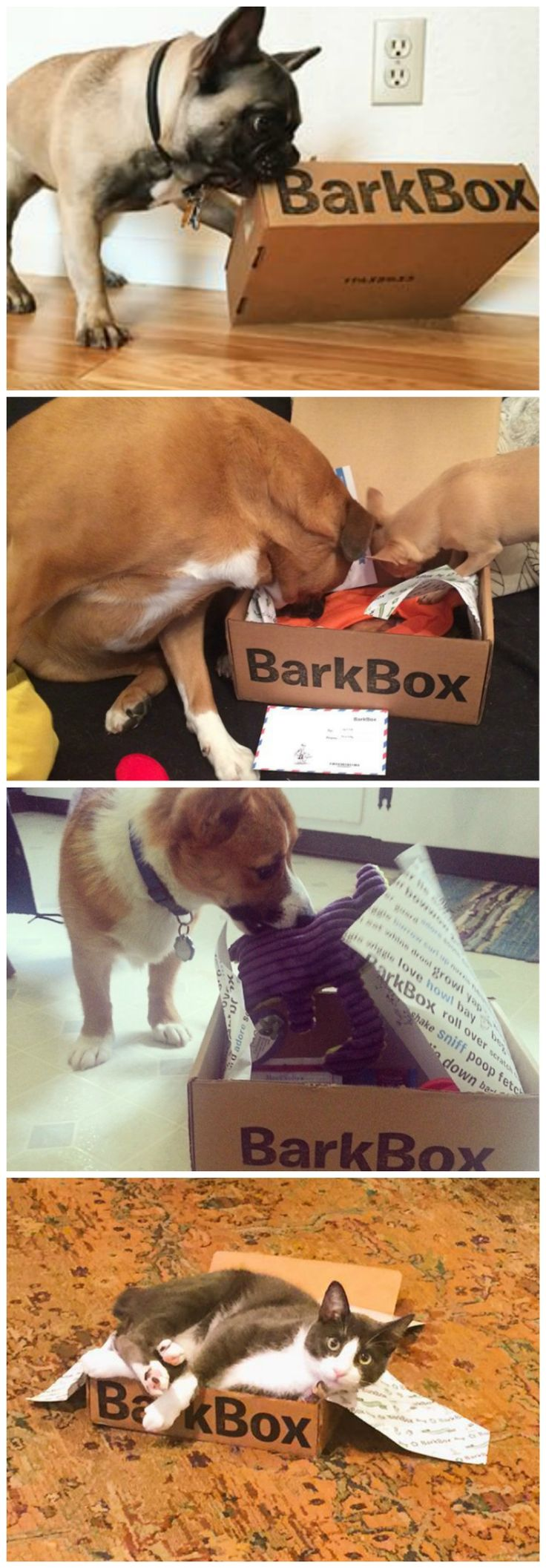 How to enjoy BarkBox every month: Retrieve box. Explore your pawsome collection of treats and toys. Remove and enjoy said pawsome goodies. Donate empty box to cat as stylish MeowBox (optional).