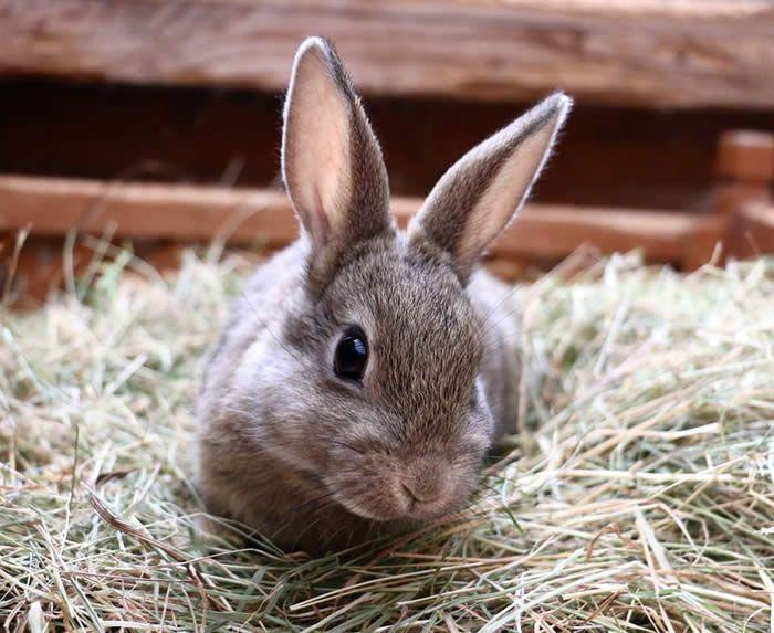Rabbits for adoption - RSPCA Manchester & Salford