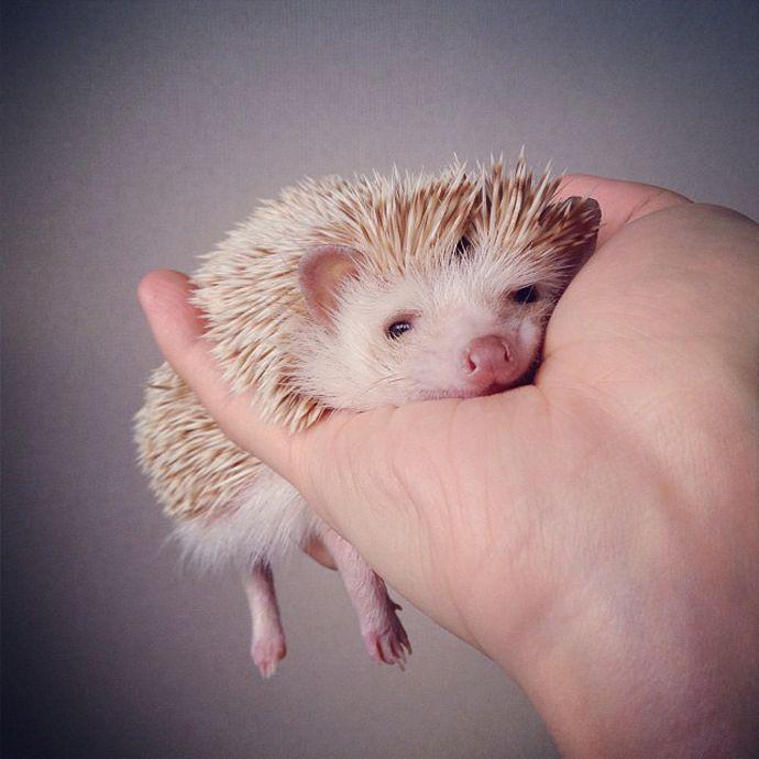 Darcy the flying hedgehog!
