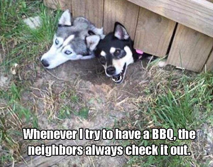 Funny Animal Pictures Of The Day – 21 Pics - Daily Lol Pics