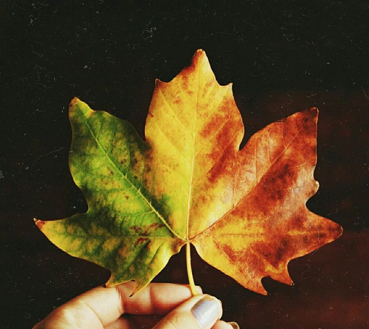 How beautiful the leaves grow old 🍁