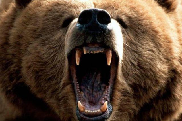 Elle accouche seule en forêt... encerclée par des ours!