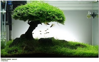 Bonsai Fish Tank. No Way! I absolutely love this