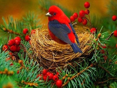Hogar: God Creations, Birds Nests, Little Birds, My Life, Red And Blue, Pretty Birds, Red Robins, Beautiful Birds, Wild Birds