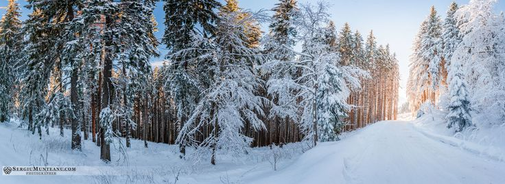more MAGIC for today =) www.SergiuMunteanu.com/Landscape #woods #sunset #goldehour #snow #winter #tree #road #landscape #nature #panorama #pano #photography