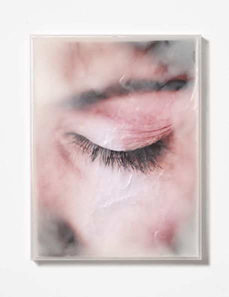 Wither 4', Chromira Photograph, Microcrystalline wax and Perspex, 50x38x2cm, 2011