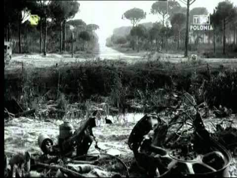 ▶ WOJTEK Niedźwiedź, który poszedł na wojnę. II Wojna Światowa - YouTube