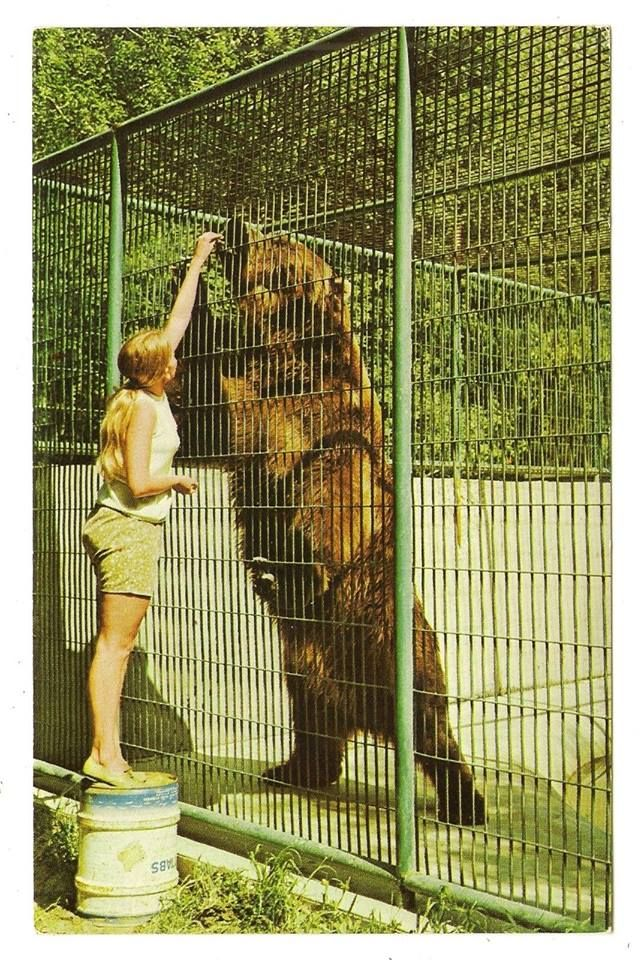 CLYDE The largest known Kodiak bear lived at the Dakota ...
