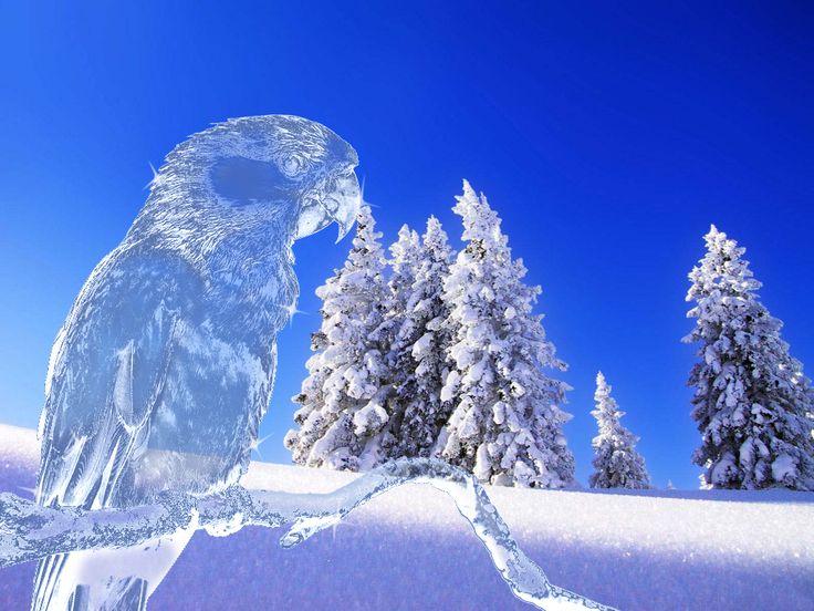 Tutorial :: Creare un pappagallo di ghiaccio