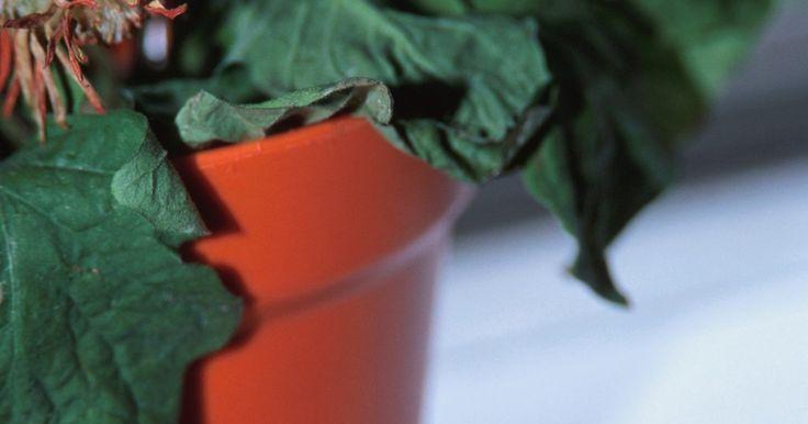 Gusanos en la casa. Los propietarios de viviendas a menudo se encuentran con que hay larvas blancas en el interior de sus habitaciones, lavandería, cocinas y baños. Algunas larvas blancas viven también en el terreno de las plantas del interior, donde se alimentan de las raíces de plantas y tejidos. Las larvas encontrado as en el interior pueden ser la larva de la ...