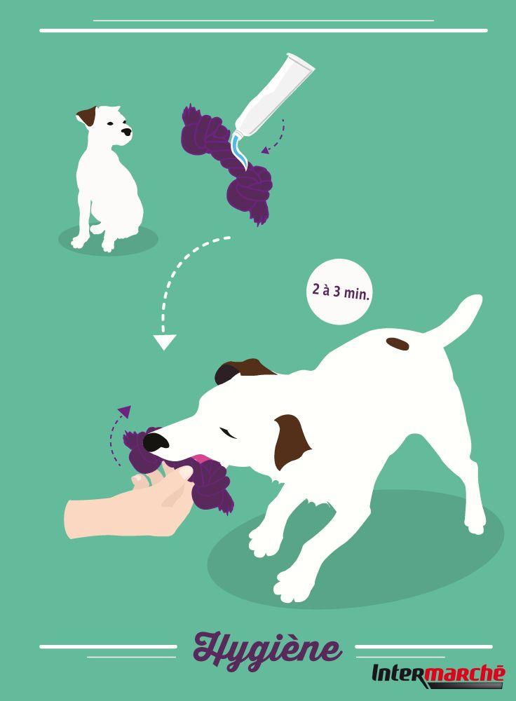 #Astuce : brosser les dents de votre chien. 1) Appliquer une couche de pâte dentifrice pour chien sur son jouet préféré. 2) Jouer avec lui 2 ou 3 minutes pour lui faire mordre et mâchouiller le jouet enduit de dentifrice !