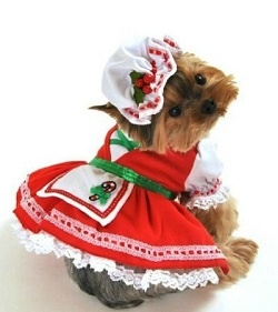 12 Christmas outfits for dogs - who's ready for an ugly sweater contest at the dog park? :)